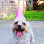 子供の1歳の誕生日会の事前準備は大丈夫!?人気の メニューと飾り付け集!