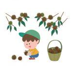 子供が大好きな栗拾い!栗園に行く前のマナーや持ち物を確認しておこう!