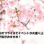 子供へのサプライズでイベントが大盛り上がり!?マジック桜がおすすめ!